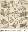 Animals around the World.Hand drawn full sized set 29662803