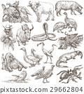 Animals around the World.Hand drawn full sized set 29662804