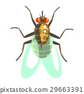 Fly insect colorful cartoon character 29663391