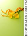 顏色 花朵 花 29668462