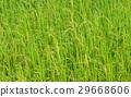 agriculturalist, agriculture, agriculturist 29668606