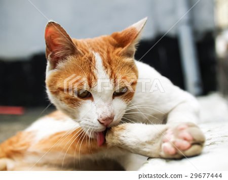 고양이 29677444