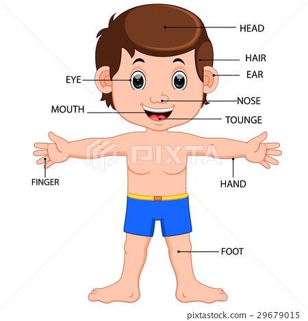 boy body parts diagram poster