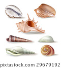 Set of vector illustrations seashells of various 29679192