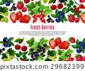水果 漿果 樣板 29682399