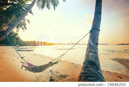 Tropical beach 29686203