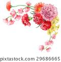 康乃馨 花朵 花 29686665