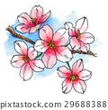 bloom, blossom, blossoms 29688388