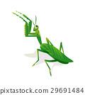 Mantis in an attacking pose 29691484