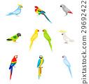鹦鹉 矢量 矢量图 29692422