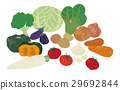 vector vectors vegetables 29692844