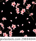 Peach Flower Blossom on Black Background. 29694044