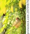 漂亮 树 树木 29704876