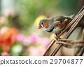 小鸟 漂亮 篮子 29704877