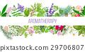 Big banner set of popular essential oil plants 29706807