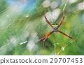蜘蛛 大 懸掛 29707453
