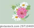 Zinnia flowers  on white background  29710469