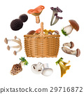 Collection of various species edible mushrooms and 29716872