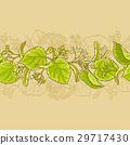 椴樹 林登 向量 29717430