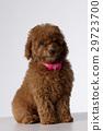 Pets 29723700