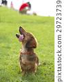 Pets 29723739