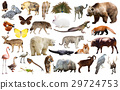 animal, collection, asia 29724753