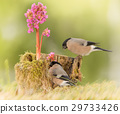 nature, animal, cute 29733426