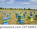 Beehives and sunflowers in a field in countryside 29738865