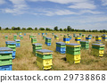Beehives in a field in front of sunflowers 29738868