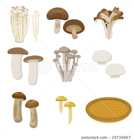 버섯, 세트, 식자재 29739067