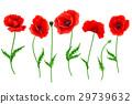 罂粟花 抠图 白底 29739632