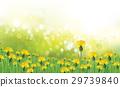 dandelion, flower, field 29739840
