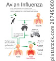 Avian Influenza.Virus Bird, Vector, Illustration. 29745060