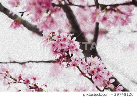 櫻花,花,早春,櫻花,花,春天,櫻桃,花,早春, 29748126