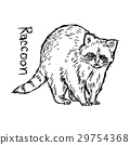 raccoon - vector illustration 29754368