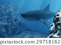 3D Shark diving in deep sea 29758162