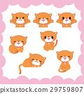 貓 小貓 漂亮 29759807