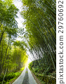 Bamboo forest, natural background 29760692
