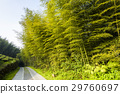 Bamboo forest, natural background 29760697