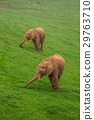 Wildlife Elephants family in safari in Africa 29763710