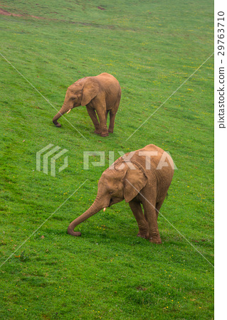 Wildlife Elephants family in safari in Africa 29763710