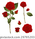 Beautiful Red Rose - Rosa. Valentine Day. 29765203