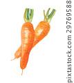 一根胡萝卜 胡萝卜 水彩 29769588