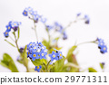 forget-me-not, bloom, blossom 29771311