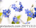 ดอกไม้,กลีบ,ฤดูใบไม้ผลิ 29771313