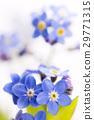ดอกไม้,กลีบ,ฤดูใบไม้ผลิ 29771315