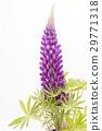 ดอกไม้,กลีบ,ผักใบ 29771318