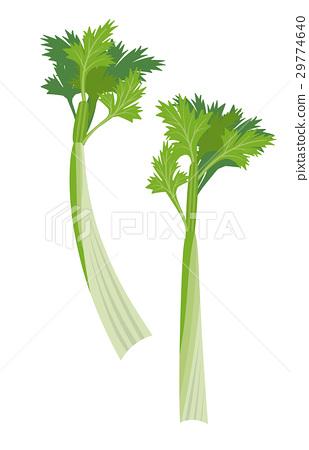 芹菜[食品系列] 29774640