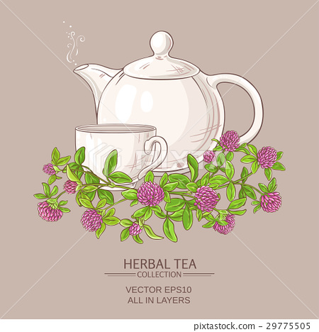clover tea illustration 29775505