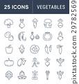 Set Vector Flat Line Icons Vegetables 29782569
